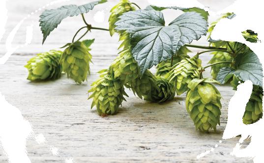 O'Haras - Irish Pale Ale